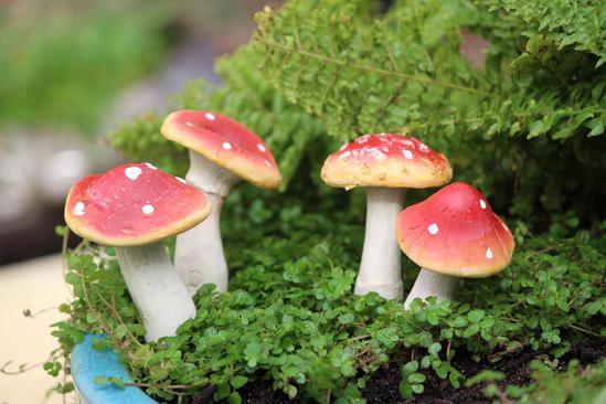 Mushroom Miniature Fairy Garden