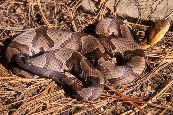 snake gaiters