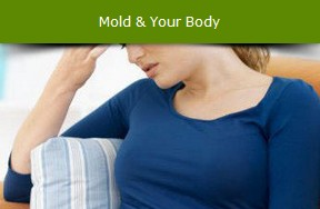 See If Some Of Your Symptoms Just Might Be Related To Toxic Mold Exposure Get Medical Lab Tests Done And Find Treatment Options That Fit