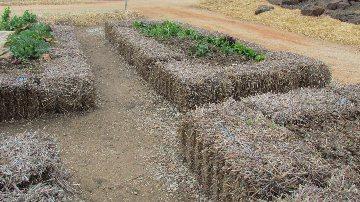 straw bale vegetable garden