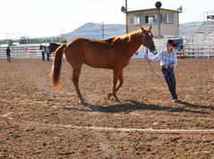 4-H/FFA Halter & Performance Horse Show
