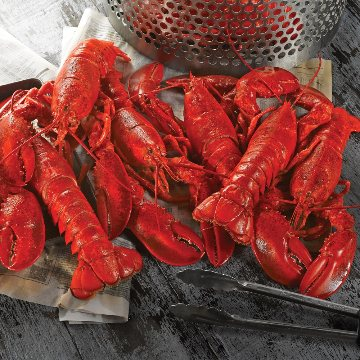 Just the Lobster!